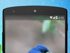 Blue Sparrow Live Wallpaper 1.0 Screenshot