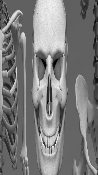 Bones Human 3D (anatomy) 1.9.4 Free Download