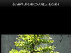Bonsai Tree Lover 2.2 Screenshot