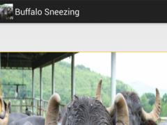 Buffalo Sneeze 1.0 Screenshot