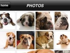 Bullies - English Bulldog Fun 1.5 Screenshot
