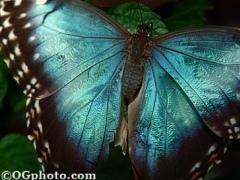 Butterflies of the World Screen Saver and Wallpaper 3.3 Screenshot