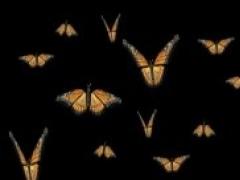 Butterflies Screensaver 01 Screenshot