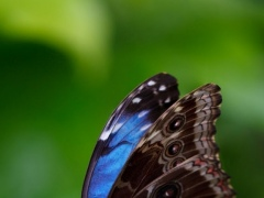 Butterfly Live Wallpaper HD 1.0 Screenshot