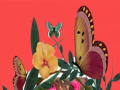 Butterfly Photo Grid 2 1.0 Screenshot