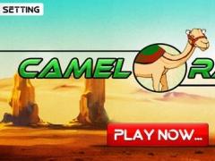 Camel race 2016 game 1.0 Screenshot