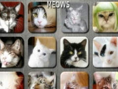 Cat and Kitten Fun Meow Sounds 1.2.7 Screenshot