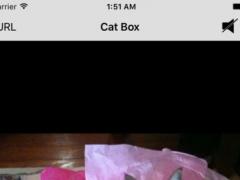 Cat Box 1.0 Screenshot