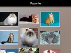 Cat Breeds Guide 2.0 Screenshot