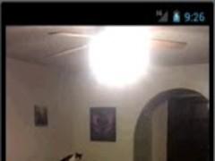cat fllying live wallpeper 1.0 Screenshot