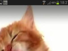 CAT LICKS LIVE WALLPAPER PRO 1.1 Screenshot