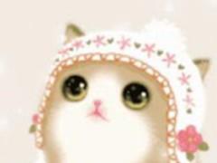 Cat Live Wallpaper 1.0 Screenshot