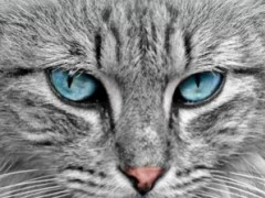 Cat Pictures - Cat Wallpaper 4.0 Screenshot