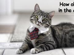 Cat scanner joke 1.0 Screenshot
