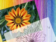 Chromotherapy - Make Your Pictures To Color Therapy Art books for Adults 1.1 Screenshot