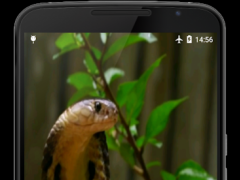 Cobra Video Live Wallpaper 2.0 Screenshot