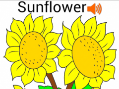 Coloring Flower Pages  Screenshot