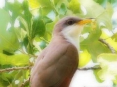 Cuckoo Birds - Zoologists and Taxonomists Dream 1.0 Screenshot
