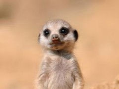 Cute Baby Animals Pictures 1.0 Screenshot