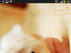 Cute baby dogs HD wallpaper 1.0 Screenshot