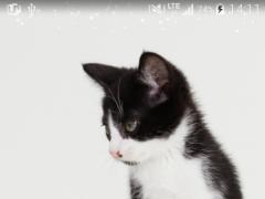 cute cat livewallpaper 1.0 Screenshot