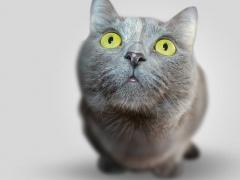 Cute Cat Wallpapers Background 1.0.2 Screenshot