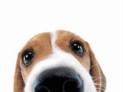 Cute Dog Sniffs Live Wallpaper 3.5 Screenshot
