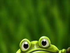 Cute Froggy 1.0 Screenshot