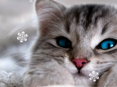 Cute Winter Wallpaper 1.0.3 Screenshot