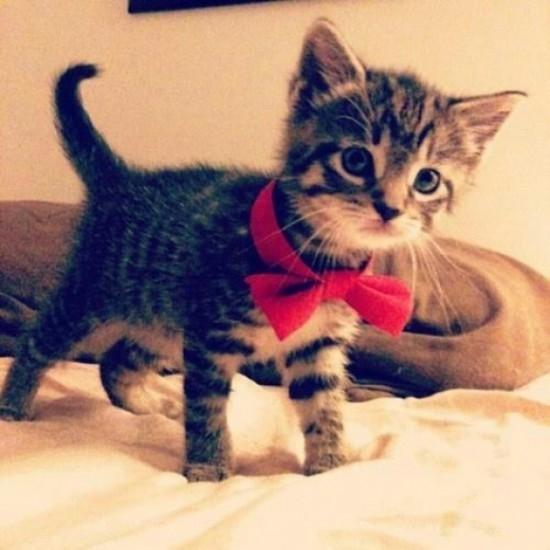 Cute Xmas Cat Live Wallpaper 1 0 Free Download