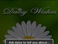 Daisy Wishes 3.1.1 Screenshot