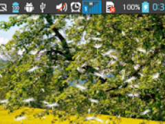 Dandelion Field Live Wallpaper 1.0.5 Screenshot