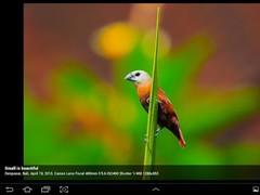 Dazzlide 2.6 Screenshot