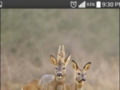 Deer Live HD Wallpapers 1.2 Screenshot