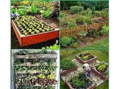 DIY Vegetable Garden Ideas 1.1 Screenshot