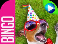 Dog Bingo 1.8.29 Screenshot