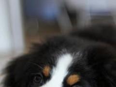 Dog Clicker 1.3 Screenshot