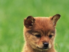 Dog Puppies Live Wallpaper 12.0 Screenshot