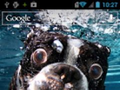 Dog Underwater Live Wallpaper 1.0 Screenshot