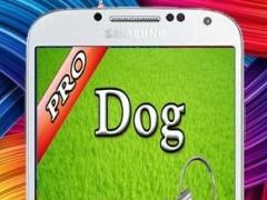 Dog Whistle, Free Dog Trainer! 1.0 Screenshot