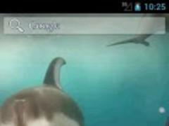 Dolphins Video Live Wallpaper 1.3 Screenshot