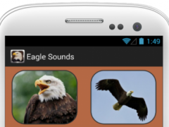 Eagle and Hawk Sounds 3.0.69 Screenshot
