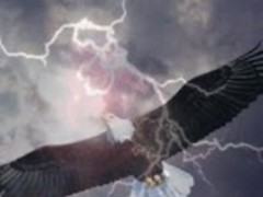 Eagle in the Sky Live Wallpape 1.0 Screenshot