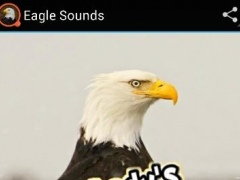 Eagle Sounds 1.0 Screenshot