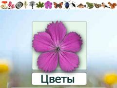EcoGuide: Russian Wild Flowers 3.03 Screenshot