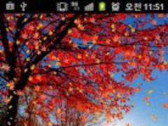 Fall (autumn) LiveWallpaper 10 2.0 Screenshot