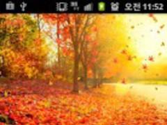 Fall (autumn) LiveWallpaper 12 2.0 Screenshot