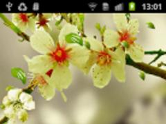 Falling Spring Flowers Theme 1.3 Screenshot