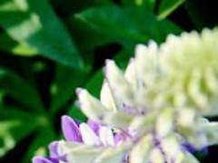 Flora Beauty Wallpaper 7.5 Screenshot