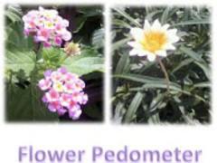 Flower Pedometer 5.5 Screenshot